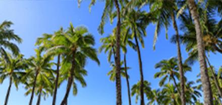 ハワイで働こう!